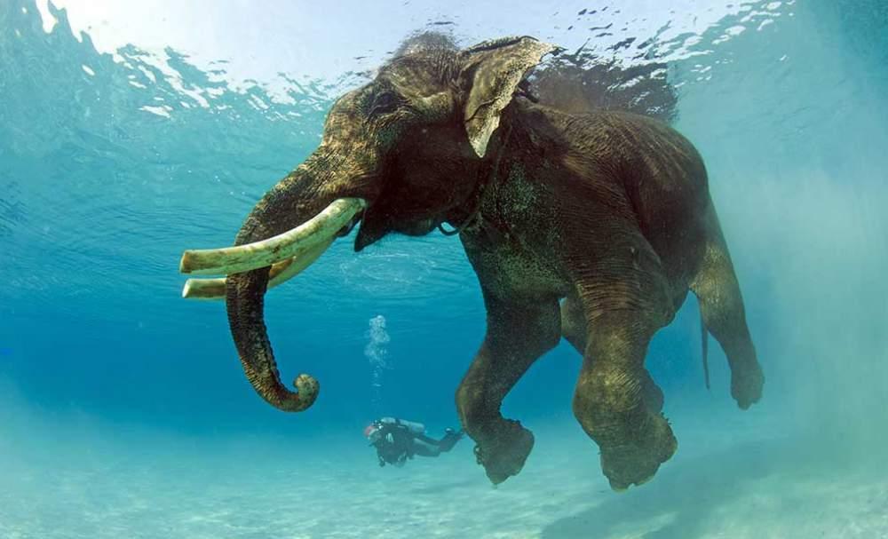 Дайвинг на Шри-Ланке
