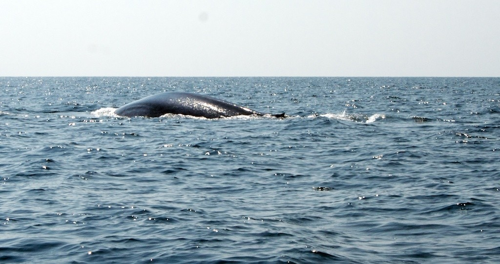 шри ланка киты