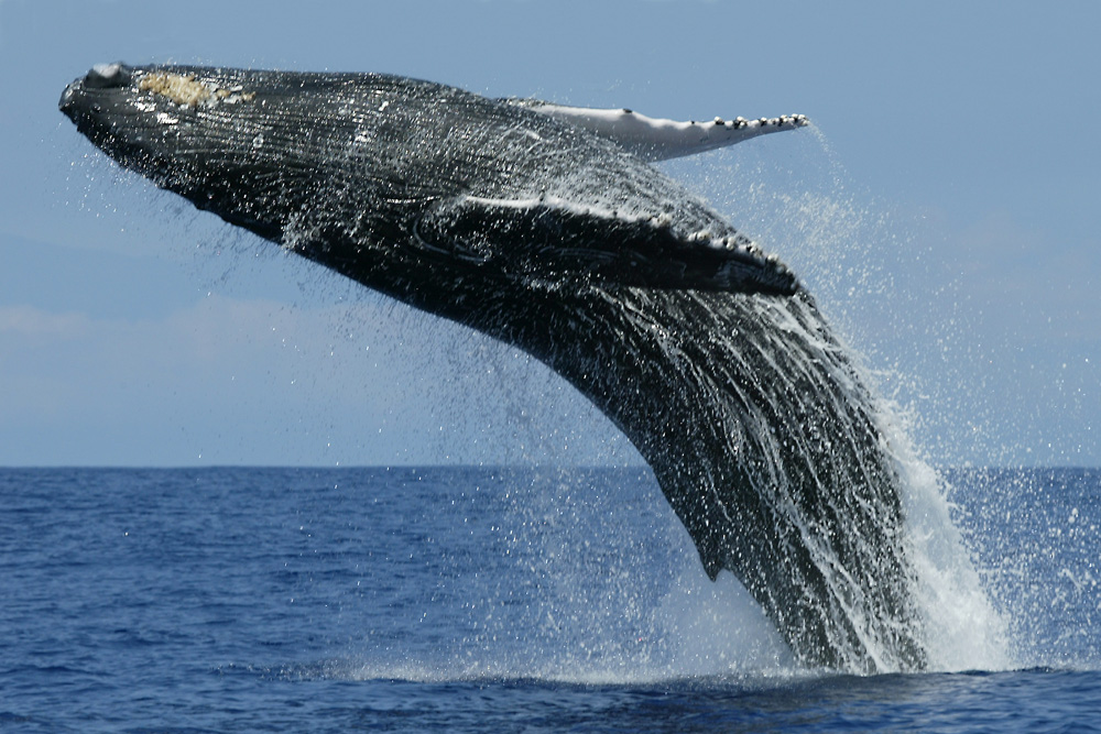 шри ланка киты экскурсия