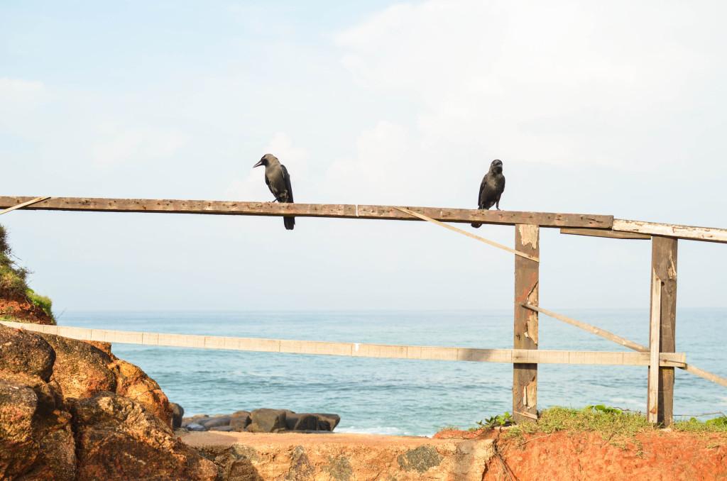 Вороны пляж Мирисса фото