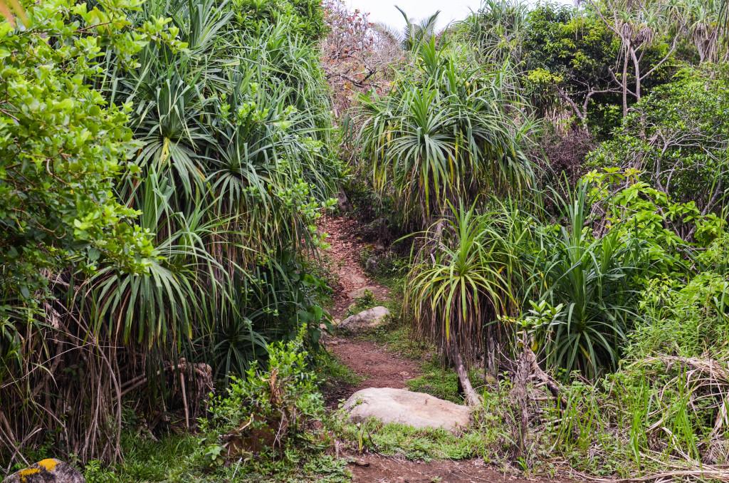 Дорога к джангл бич Шри-Ланка