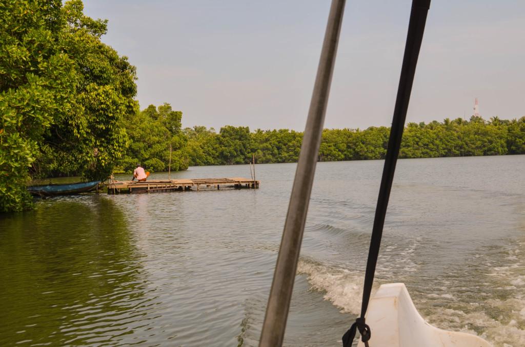 Озеро Коггала рыбки 2