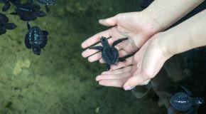 черепаховая ферма шри ланка