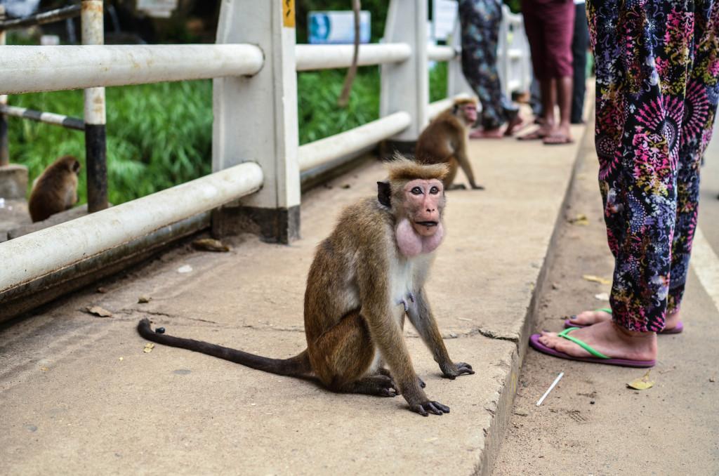 водопад равана местная обезьяна
