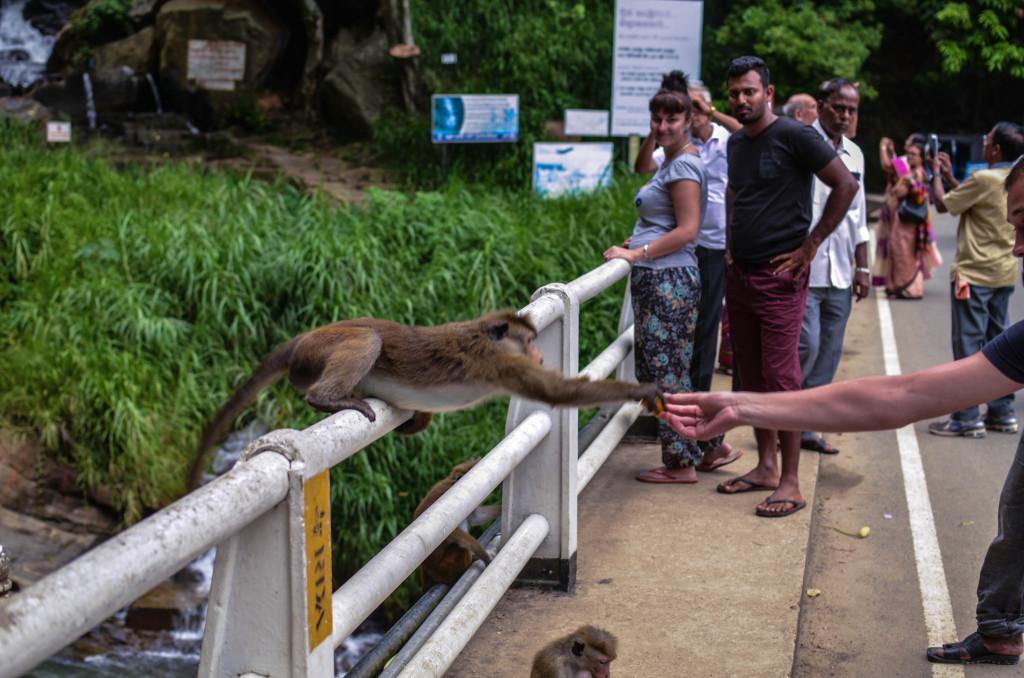 водопад равана кормежка обезьян