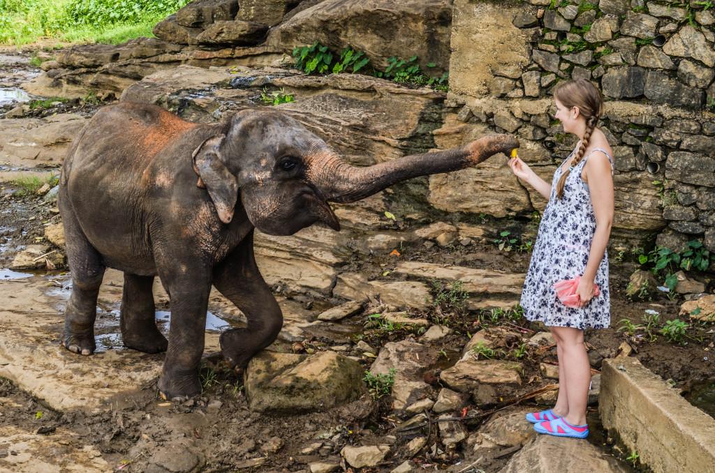 Пинавелла слоновий питомник Шри Ланка