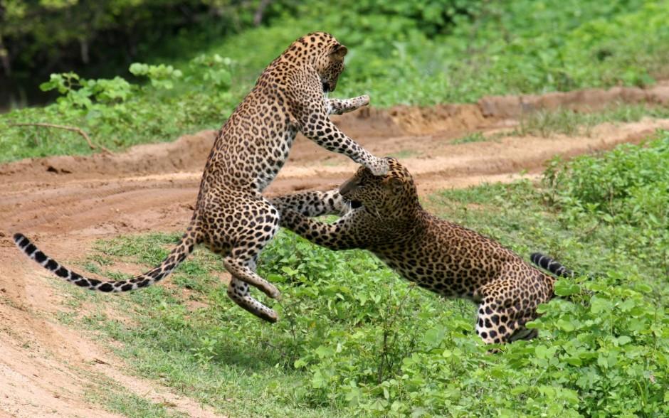 Национальный парк Яла на Шри-Ланке