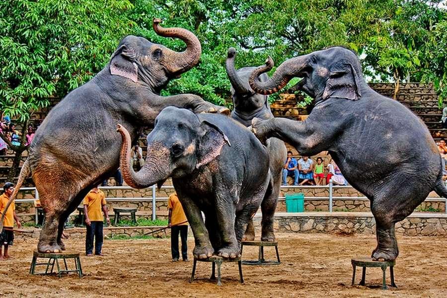 Зоопарк в Коломбо фото