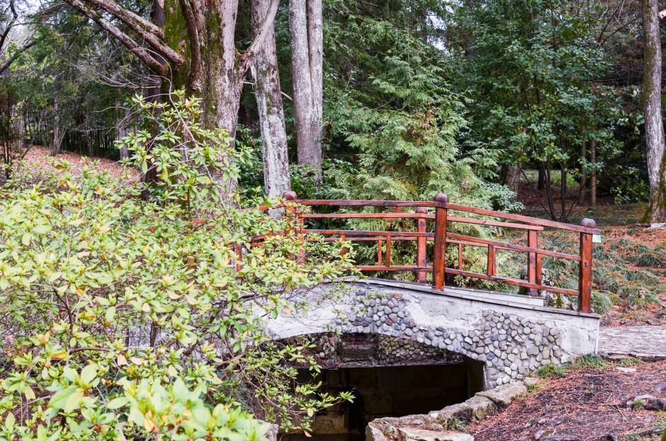 Дендрарий Сочи японский садик мостик