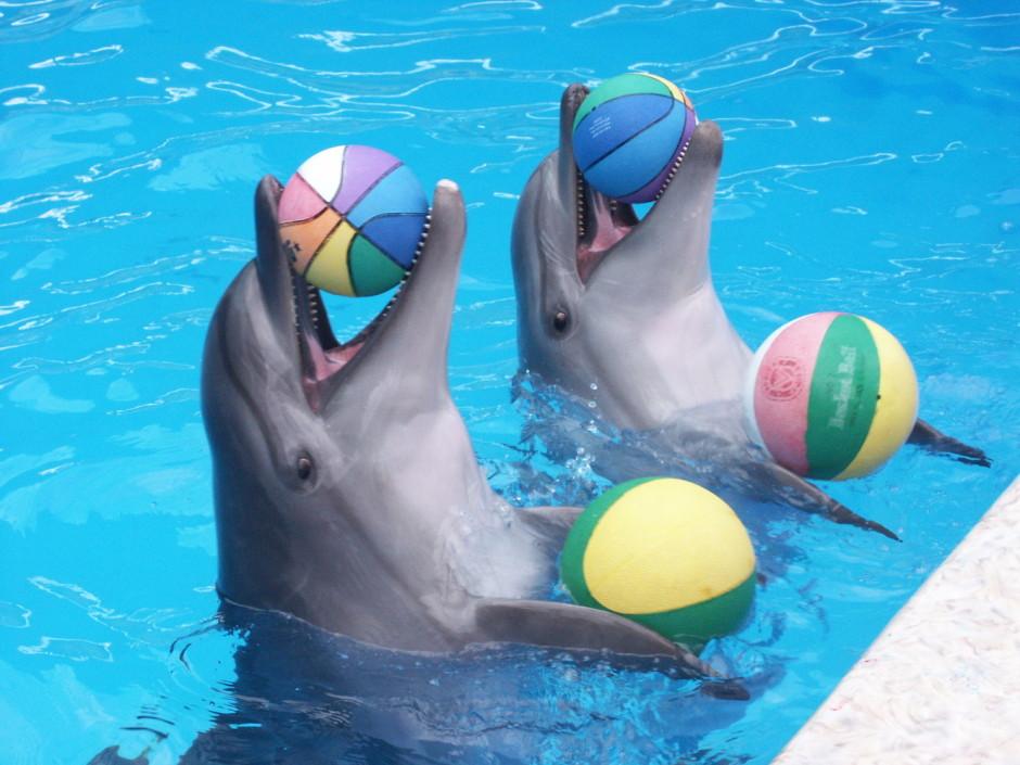 Чем заняться в Сочи зимой - Дельфинарий Акватория