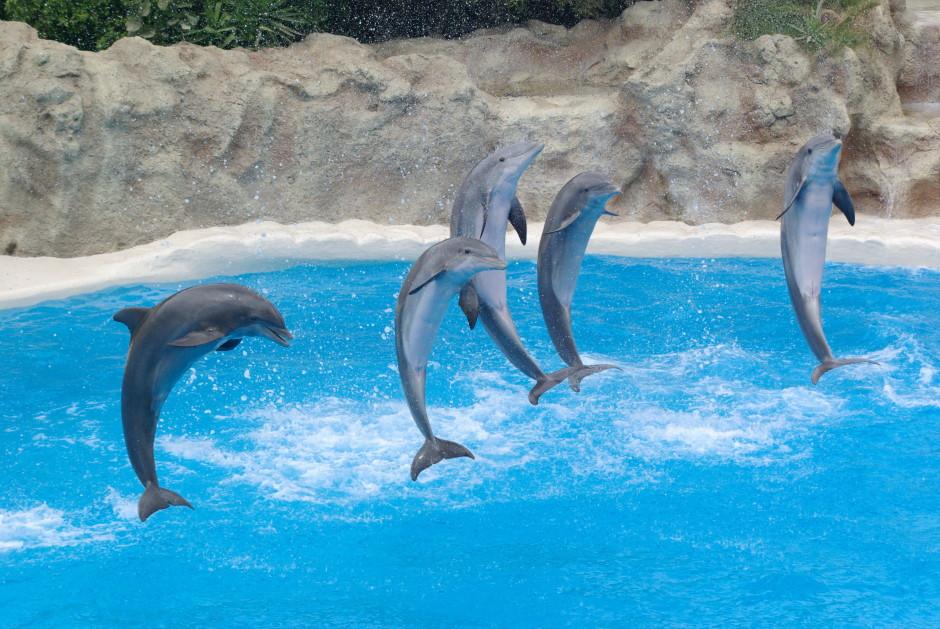 Дельфинарий в Сочи в Парке Ривьера