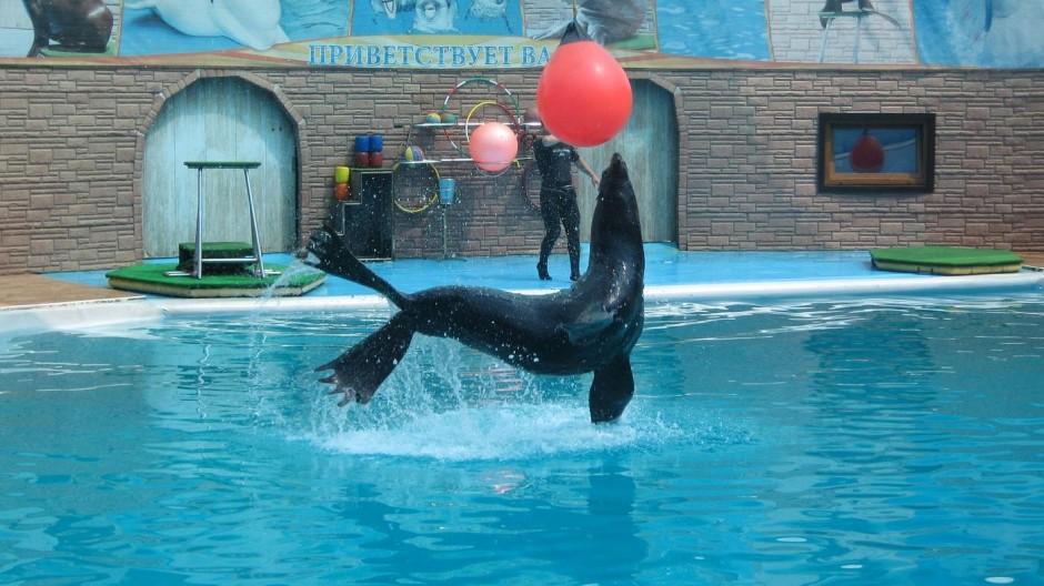 дельфинарий акватория сочи