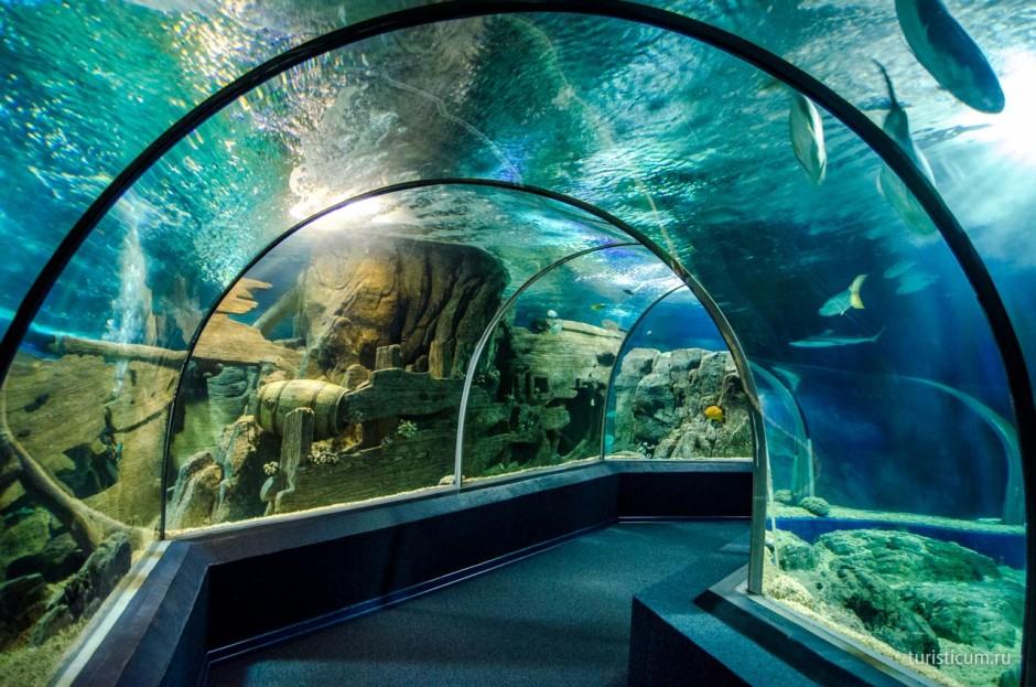 Развлечения в Сочи зимой - Океанариум Сочи Адлер